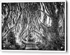 Dark Hedges Acrylic Print by Craig Brown