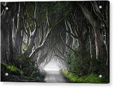 Dark Hedges Acrylic Print