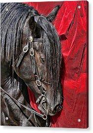 Dark Horse Against Red Dress Acrylic Print by Jennie Marie Schell