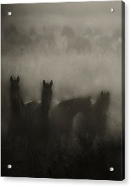 Dark Horse Dreams Acrylic Print by Ron  McGinnis