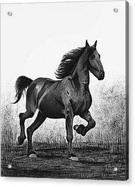 Dark Horse Acrylic Print by Sesh Artwork
