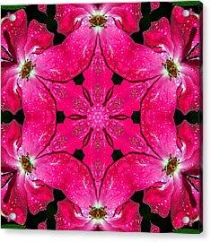 Dark Pink Splendor Mandala Acrylic Print