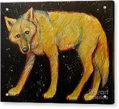 Dark Sky Coyote Acrylic Print