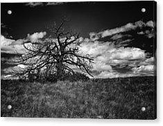 Dark Tree Acrylic Print by Tony Boyajian