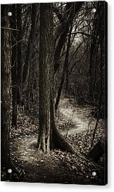 Dark Winding Path Acrylic Print by Scott Norris