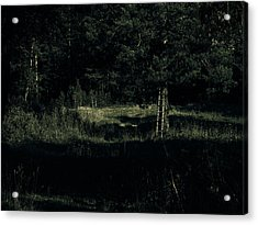 Dark Woods Acrylic Print by Alexei Biryukoff