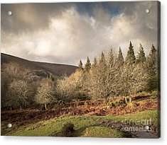 Dartmoor View Acrylic Print