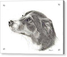 Dash Acrylic Print by Mary Mayes