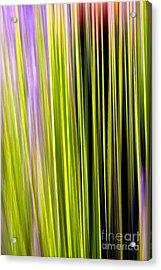Dasylirion Velocity Acrylic Print by Douglas Taylor