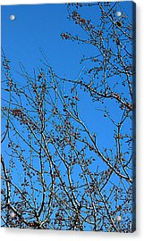 Dave's Blue Sky Acrylic Print by Joseph Yarbrough