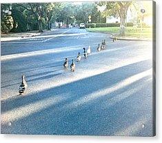 Davis Ducks Acrylic Print by Cadence Spalding