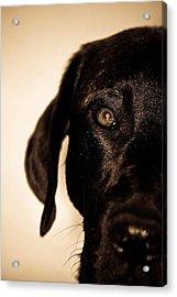 Dawg Acrylic Print by Jamie Bishop
