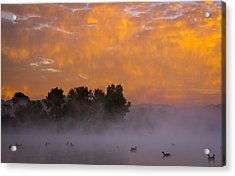 Dawn At The Sepulveda Dam Wildlife Reserve Acrylic Print