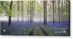 Dawn Bluebell Wood Panoramic Acrylic Print by Tim Gainey