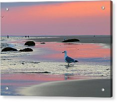 Acrylic Print featuring the photograph Dawn In Pink by Dianne Cowen
