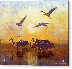 Dawn On The Bosque Sandhill Cranes Acrylic Print by R christopher Vest
