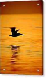 Dawn Pelican  C6j8211 Acrylic Print