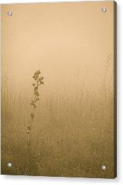 Dawning Mist Acrylic Print by Tim Good