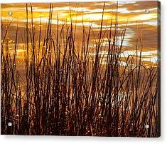 Dawn's Early Light Acrylic Print by Karen Wiles