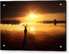 Dawn's Golden Light Acrylic Print