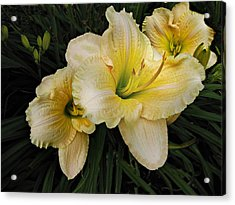 Day Lilies A Short Life Acrylic Print