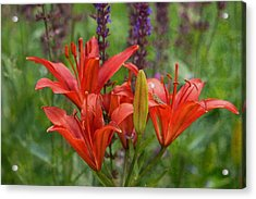 Lilies And Foe Acrylic Print by Kae Cheatham
