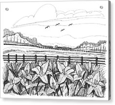 Acrylic Print featuring the drawing Day Lilies At Northwind Farms by Richard Wambach