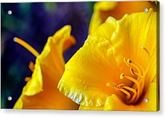 Acrylic Print featuring the photograph Day Lilies by Cathy Donohoue