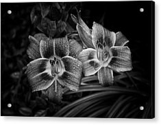 Acrylic Print featuring the photograph Day Lilies Number 4 by Ben Shields