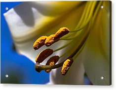 Day Lilly Macro With Sky Background Acrylic Print