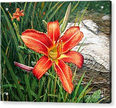 Day Lily Acrylic Print by Bob  George