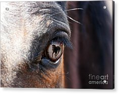 Daydream Of A Horse Acrylic Print