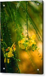 Daydream Acrylic Print