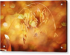 Daydreams In The Meadow Acrylic Print