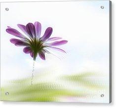 Daylight Acrylic Print
