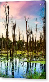 Daylight In The Swamp Acrylic Print by Lars Lentz