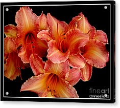 Acrylic Print featuring the photograph Daylilies 1 by Rose Santuci-Sofranko