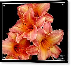 Acrylic Print featuring the photograph Daylilies 2 by Rose Santuci-Sofranko
