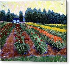 Daylily Delight Acrylic Print by David Zimmerman