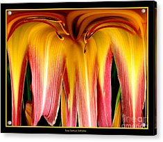 Daylily Flower Abstract 3 Acrylic Print by Rose Santuci-Sofranko
