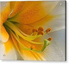 Acrylic Print featuring the photograph Gold Daylily Close-up by Patti Deters