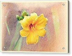 Daylily  Showers Acrylic Print