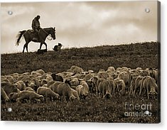 Days End Sheep Herding Acrylic Print