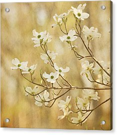 Days Of Dogwoods Acrylic Print