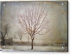 Days Of Old Acrylic Print by Betty LaRue
