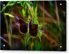 Dazzling Dragonfly Acrylic Print by Barry Jones