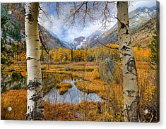 Dazzling Fall Foliage Acrylic Print by Mark Whitt
