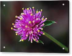Acrylic Print featuring the photograph Dbg 050812-1779 by Tam Ryan