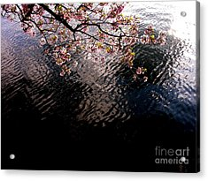 Dc Cherry And Black Acrylic Print by Jacqueline M Lewis