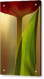 Vertical Tulip Acrylic Print